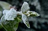 frost 29dec01