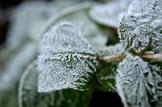 frost 29dec02