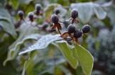 frost 29dec03
