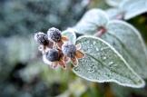 frost 29dec04