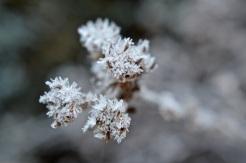 frost 29dec06