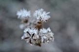 frost 29dec08
