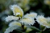 frost 29dec09