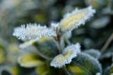 frost 29dec10