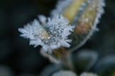 frost 29dec11
