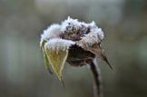 frost 29dec14