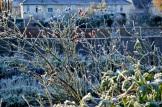 frost 29dec16