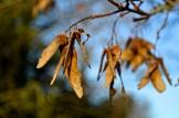 frost 29dec17