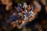frost 29dec20