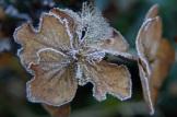 frost 29dec23