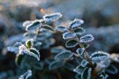 frost 29dec27