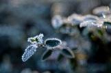 frost 29dec28