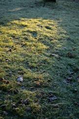 frost 29dec32