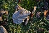 frost 29dec33