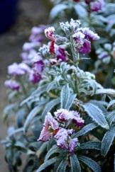 frost 29dec34