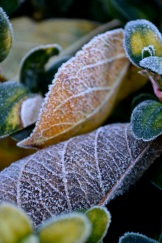 frosty morning20