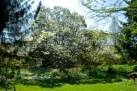 botanicals 15 april 201508