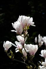 botanicals 15 april 201511