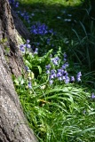 botanicals 15 april 201520
