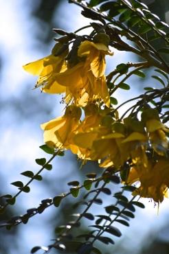 botanicals 15 april 201522