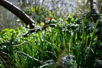 botanicals 15 april 201532