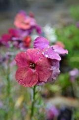 garden 3 may 201501