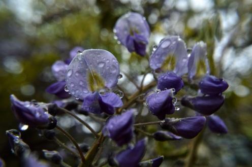garden 3 may 201513
