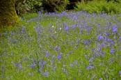 Stourhead 15 may 201539