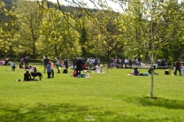 willow in the park17