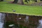 Bicton Park - 17