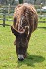 donkeys - 17