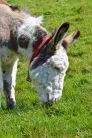 donkeys - 5