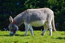 donkeys - 6