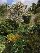 garden april 2017 - 16