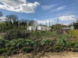 garden april 2017 - 42