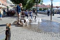 sweden blog - 102
